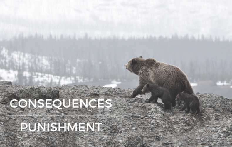 Consequences vs. Punishment for Kids
